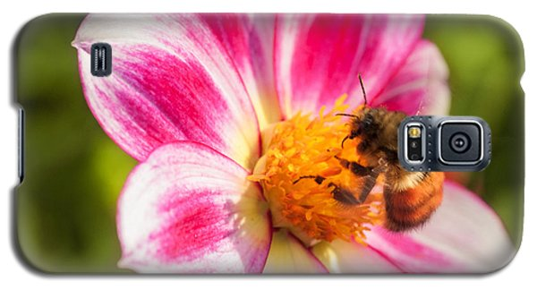 Bumble Bee Pollination Galaxy S5 Case