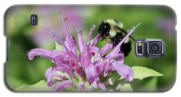 Bumblebee On Bee Balm Galaxy S5 Case