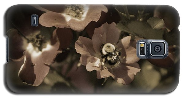Bumblebee On Blush Country Rose In Sepia Tones Galaxy S5 Case