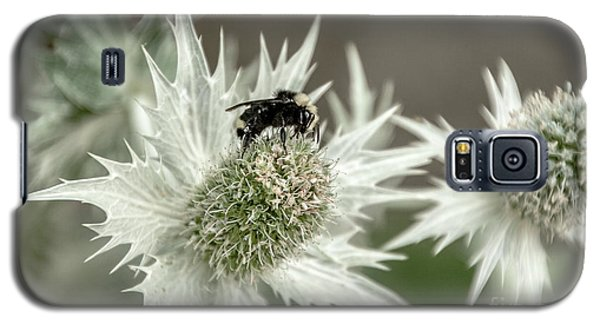 Bumblebee On Thistle Flower Galaxy S5 Case by Victoria Harrington