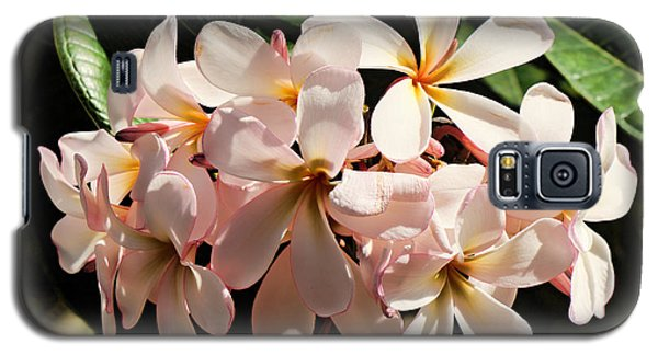 Bunch Of Plumeria Galaxy S5 Case