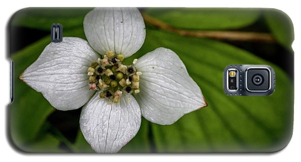 Galaxy S5 Case featuring the photograph Bunchberry Dogwood On Gloomy Day by Darcy Michaelchuk