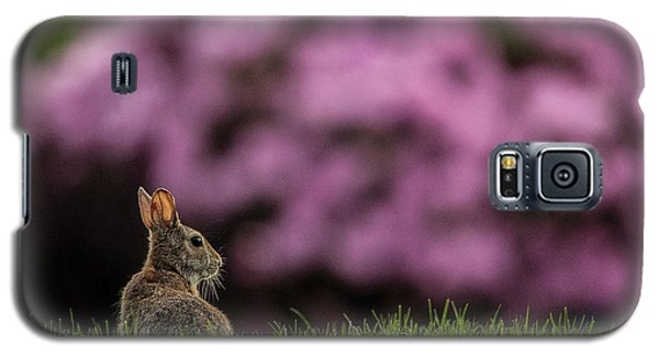 Bunny In The Yard Galaxy S5 Case