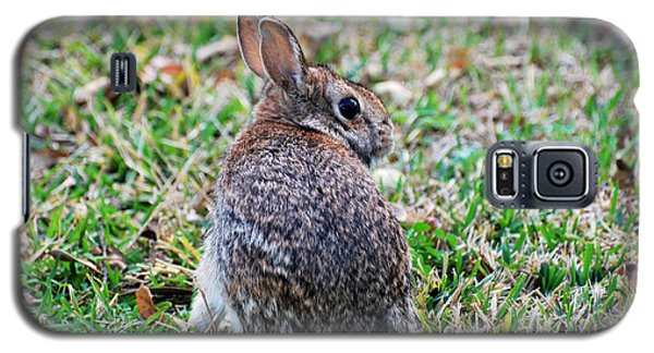 Galaxy S5 Case featuring the photograph Bunny by Teresa Blanton