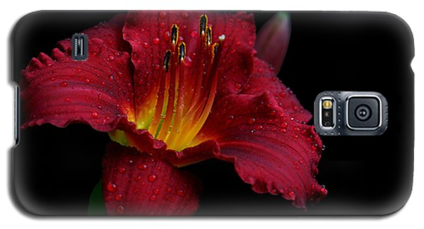 Burgundette Galaxy S5 Case by Doug Norkum