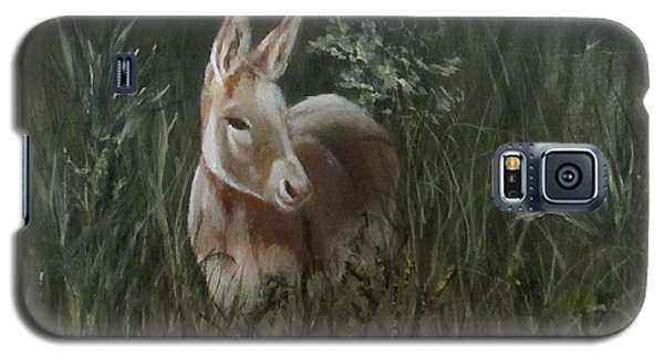 Burro In The Wild Galaxy S5 Case by Roseann Gilmore