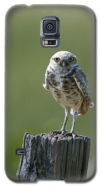 Galaxy S5 Case featuring the photograph Burrowing Owl by Gary Lengyel