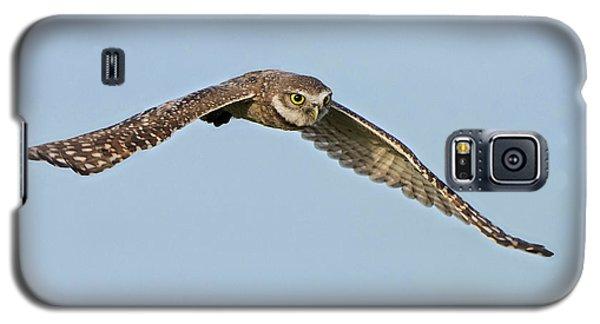 Burrowing Owl In Flight Galaxy S5 Case