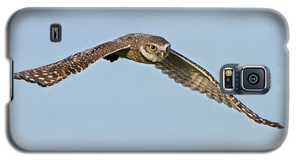 Burrowing Owl In Flight Galaxy S5 Case