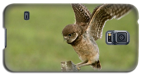 Burrowing Owl - Learning To Fly Galaxy S5 Case