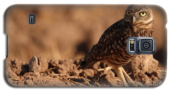 Galaxy S5 Case featuring the photograph Burrowing Owl Looking Back Over Shoulder by Max Allen