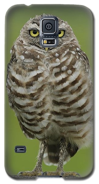 Burrowing Owl Lookout Galaxy S5 Case