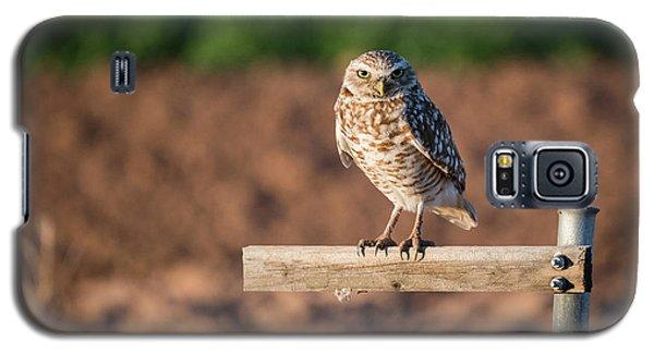 Burrowing Owl On A Perch Galaxy S5 Case