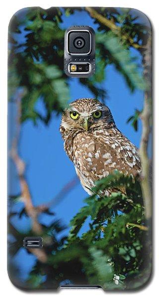 Burrowing Owl Sitting In A Tree Galaxy S5 Case