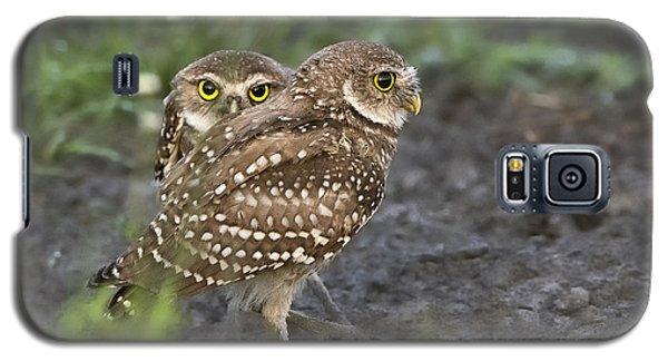 Burrowing Owl Twins Galaxy S5 Case