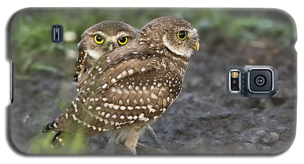 Burrowing Owl Twins Galaxy S5 Case
