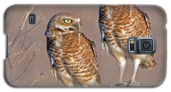 Burrowing Owls At Salton Sea Galaxy S5 Case