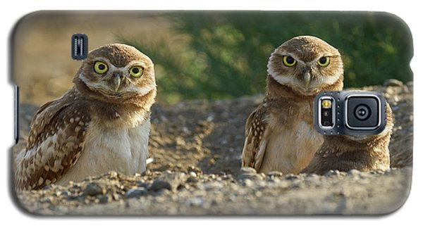 Burrowing Owls Galaxy S5 Case by Doug Herr