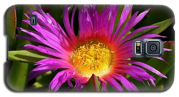 Galaxy S5 Case featuring the photograph Burst Of Beauty by Debbie Karnes
