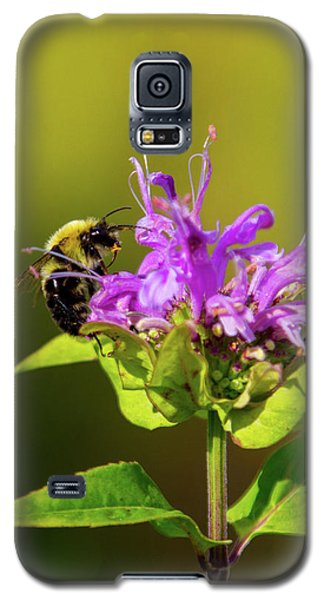 Busy As A Bee Galaxy S5 Case