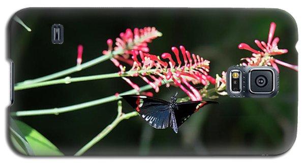 Butterfly In Flight Galaxy S5 Case