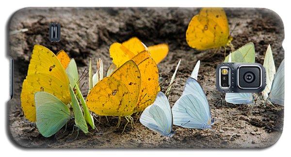 Butterflies Eating Minerals Galaxy S5 Case