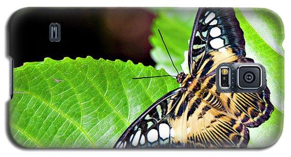 Butterfly 13a Galaxy S5 Case