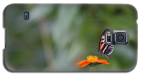 Butterfly 16 Galaxy S5 Case