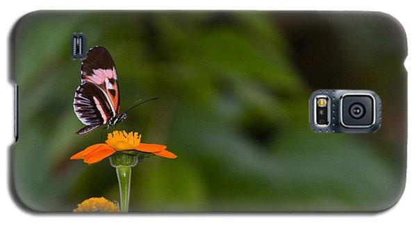 Butterfly 26 Galaxy S5 Case