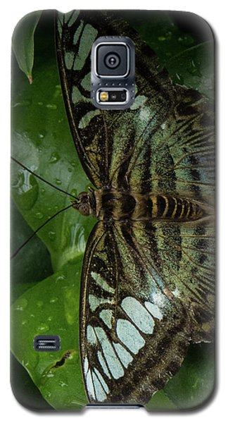 Butterfly 4 Galaxy S5 Case