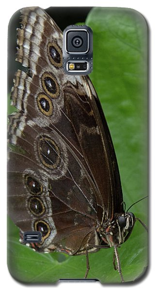 Butterfly 5 Galaxy S5 Case