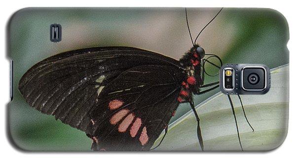 Butterfly 7 Galaxy S5 Case