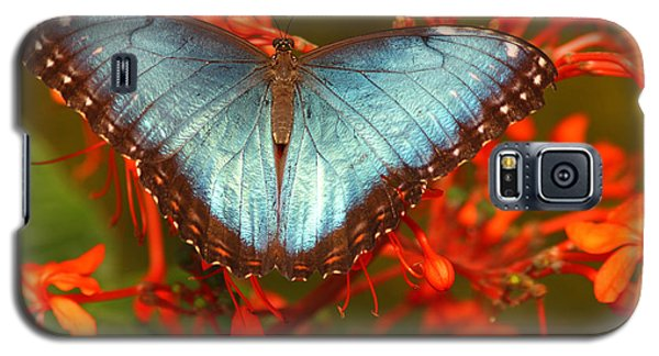 Galaxy S5 Case featuring the photograph Butterfly Among The Flowers by Max Allen