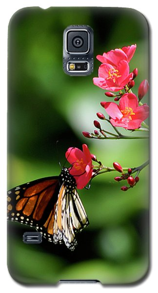 Butterfly And Blossom Galaxy S5 Case