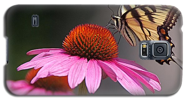 Butterfly And Coneflower Galaxy S5 Case by Byron Varvarigos