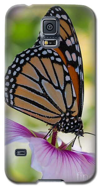 Butterfly And Hibiscus Galaxy S5 Case