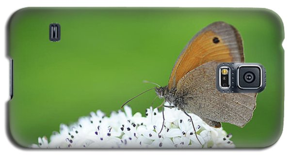 Galaxy S5 Case featuring the photograph Butterfly by Bess Hamiti
