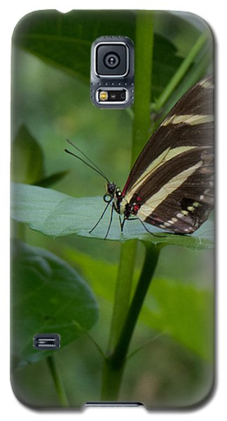 Butterfly 2 Galaxy S5 Case