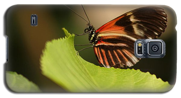 Galaxy S5 Case featuring the photograph Butterfly Curling Edge Of Leaf by Max Allen