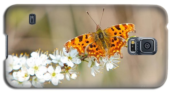 Butterfly Galaxy S5 Case by Gary Bridger