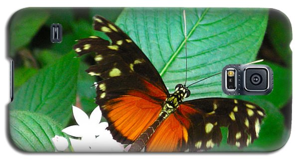 Butterfly House  Galaxy S5 Case