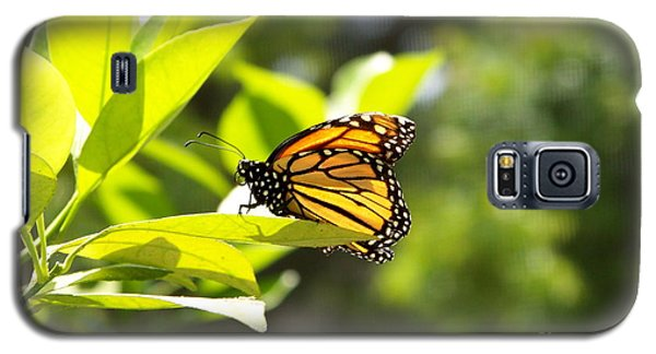 Galaxy S5 Case featuring the photograph Butterfly In Sunlight by Carol  Bradley