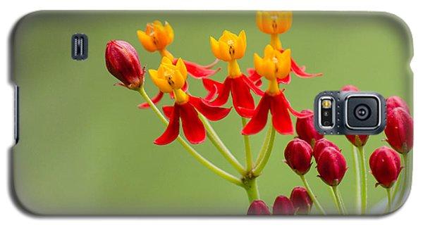Butterfly Milkweed Galaxy S5 Case