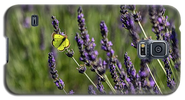 Butterfly N Lavender Galaxy S5 Case