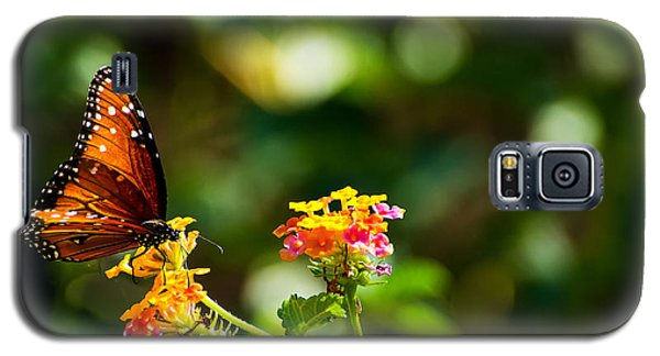 Butterfly On A Flower Galaxy S5 Case
