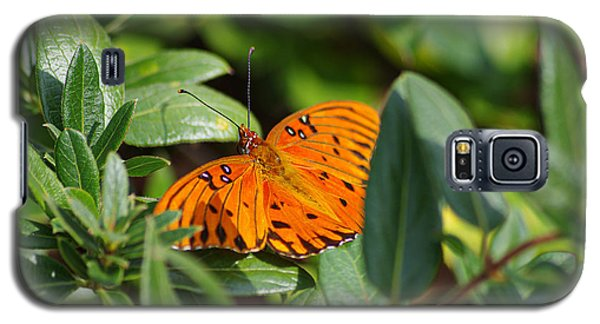 Butterfly On A Sunny Day Galaxy S5 Case