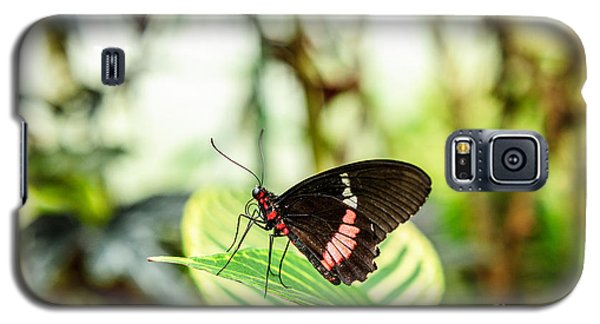 Butterfly On Leaf Galaxy S5 Case