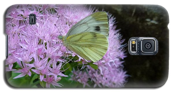 Butterfly On Mauve Flowers Galaxy S5 Case