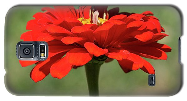 Butterfly On Red Zinnia Galaxy S5 Case
