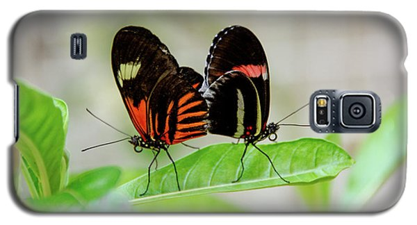 Butterfly Pair Galaxy S5 Case